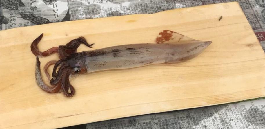 神経締め後のイカ ゆかい村海鮮どんぶりまつり2018