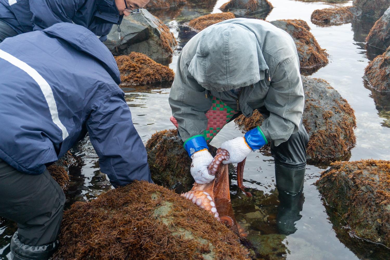 風間浦村「第28回 布海苔採り体験ツアー」